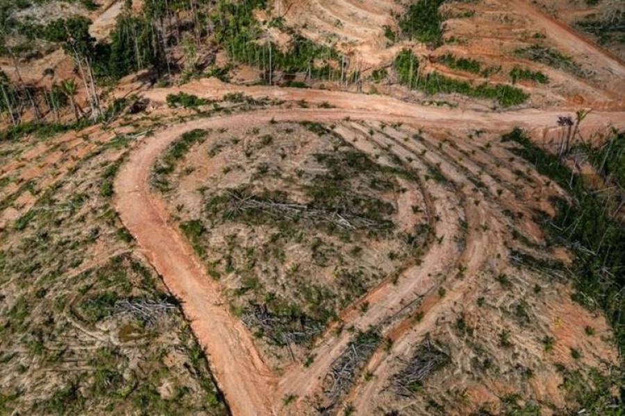 Korindo Group Klaim Telah Moratorium Pembukaan Lahan sejak 2017