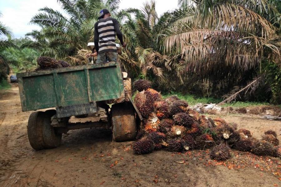 Jambi Kekurangan Pabrik Pengolahan Sawit, Apa Dampaknya ke Petani?