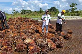 jepang-siap-tampung-limbah-pabrik-kelapa-sawit-hingga-15-tahun-ke-depan